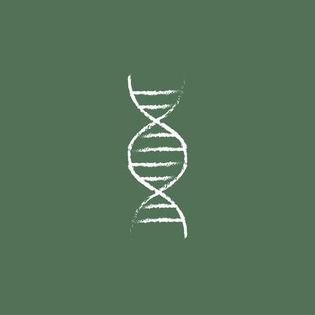 adn humano: Mano ADN dibujado en tiza en un icono blanco vector de pizarra aislado en un fondo verde.