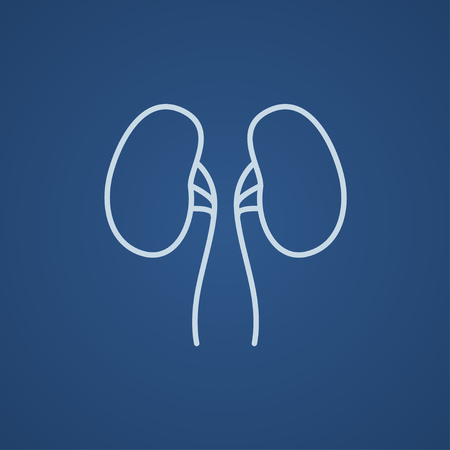 Kidney line icon for web, mobile and infographics. Vector light blue icon isolated on blue background. Illustration