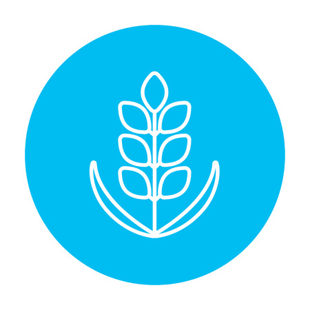 corn stalk: Wheat line icon for web, mobile and infographics. Vector white icon on the light blue circle isolated on white background. Illustration
