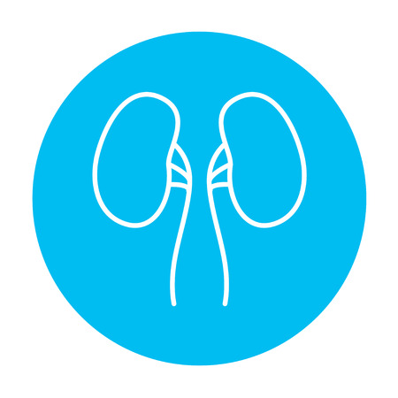 adrenal: Kidney line icon for web, mobile and infographics. Vector white icon on the light blue circle isolated on white background.