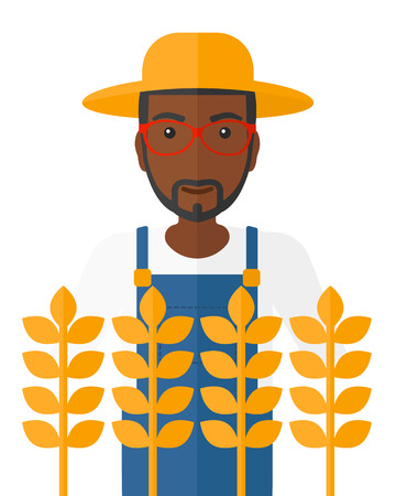 An african-american farmer standing in a wheat field vector flat design illustration isolated on white background.