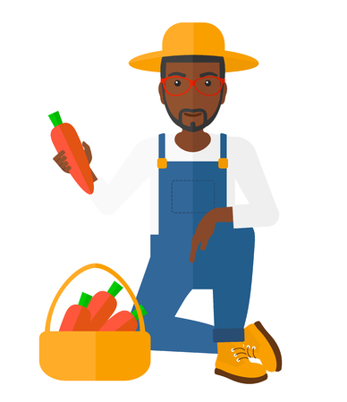 carrots isolated: An african-american farmer collecting carrots in basket vector flat design illustration isolated on white background.