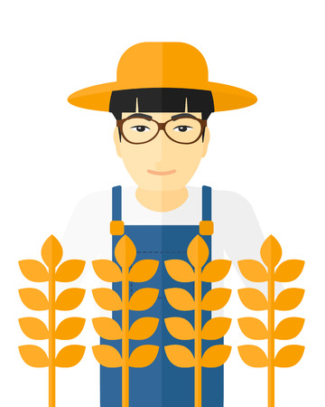 asian farmer: An asian farmer standing in a wheat field vector flat design illustration isolated on white background.