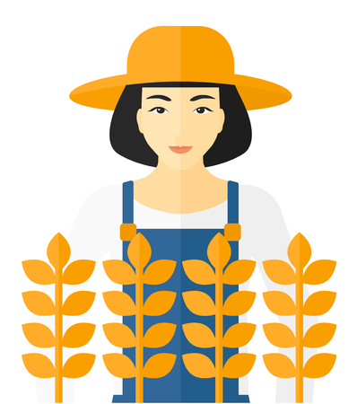 peasant woman: An asian farmer standing in a wheat field vector flat design illustration isolated on white background.