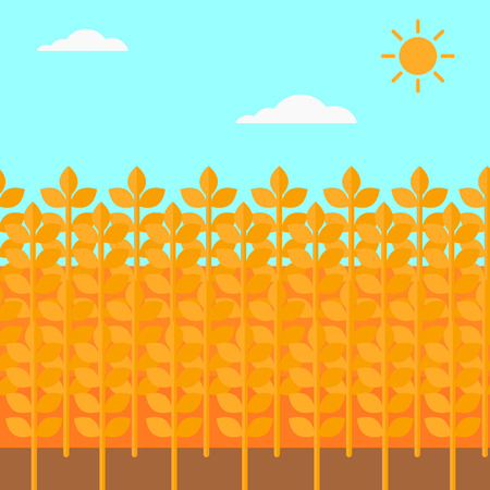 wheat field: Background of wheat field vector flat design illustration. Square layout. Illustration
