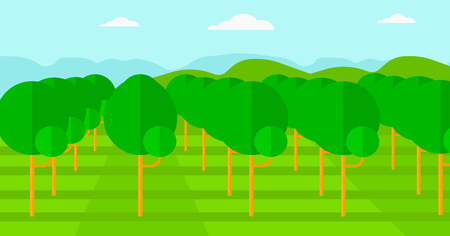 range fruit: Background of garden with fruit trees vector flat design illustration. Horizontal layout.