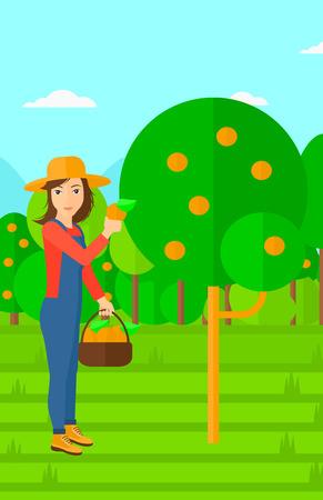 arboles frutales: Una mujer que sostiene una cesta y la recolecci�n de las naranjas ilustraci�n vectorial dise�o plano. disposici�n vertical. Vectores