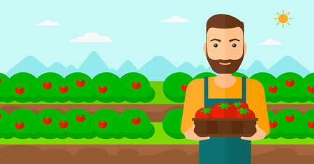 A hipster man with the beard holding a box with tomatoes on the background of field vector flat design illustration. Horizontal layout.