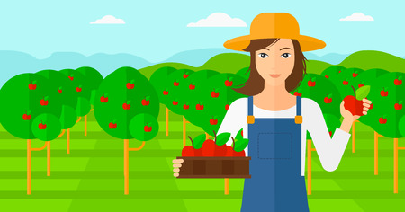 picking fruit: A woman holding a box with apples in one hand and an apple in another on a background of garden with trees vector flat design illustration. Horizontal layout.