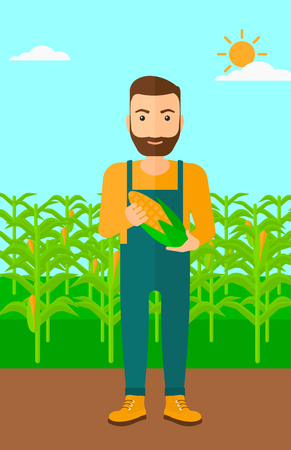 corn on the cob: A hipster man with the beard holding a corn cob on the background of field vector flat design illustration. Vertical layout. Illustration