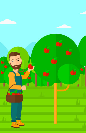 picker: A hipster man with the beard holding a basket and collecting apples in fruit garden vector flat design illustration. Vertical layout. Illustration