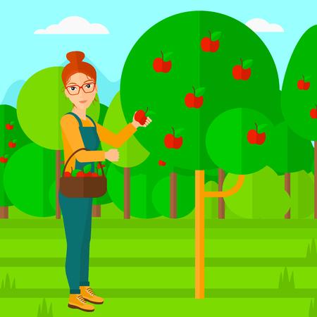 albero da frutto: Una donna con un cesto e la raccolta di mele in design piatto illustrazione giardino di frutta vettoriale. pianta quadrata.