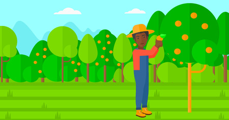 orange fruit: An african-american man holding a basket and collecting oranges vector flat design illustration. Horizontal layout. Illustration