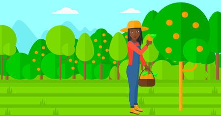albero da frutto: Una donna afro-americana in possesso di un cesto e la raccolta di arance disegno vettoriale piatta illustrazione. layout orizzontale. Vettoriali