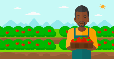 An african-american man holding a box with tomatoes on the background of field vector flat design illustration. Horizontal layout.