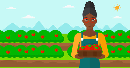 An african-american woman holding a box with tomatoes on the background of field vector flat design illustration. Horizontal layout.