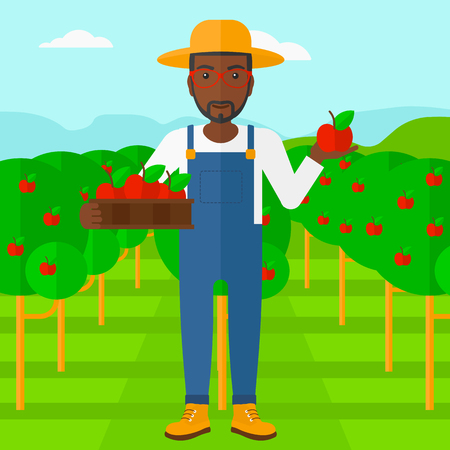 picking fruit: An african-american man holding a box with apples in one hand and an apple in another on a background of garden with trees vector flat design illustration. Square layout.