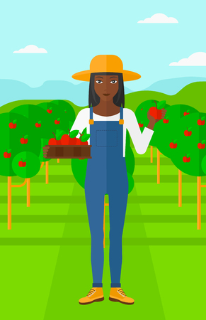 picking fruit: An african-american woman holding a box with apples in one hand and an apple in another on a background of garden with trees vector flat design illustration. Vertical layout.