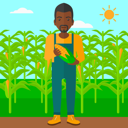 corn on the cob: An african-american man holding a corn cob on the background of field vector flat design illustration. Square layout. Illustration