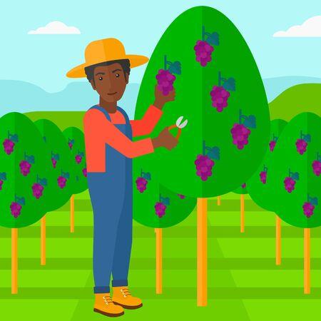 albero da frutto: Un uva raccolta uomo afro-americano in design piatto illustrazione vigna vettoriale. pianta quadrata.
