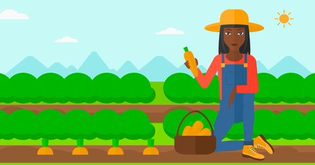 An african-american woman collecting carrots in basket on the background of field rows with green bushes vector flat design illustration. Horizontal layout. Illustration