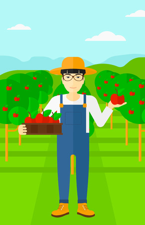 picking fruit: An asian  man holding a box with apples in one hand and an apple in another on a background of garden with trees vector flat design illustration. Vertical layout.