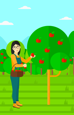 vertical garden: An asian woman holding a basket and collecting apples in fruit garden vector flat design illustration. Vertical layout.