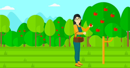 peasant woman: An asian woman holding a basket and collecting apples in fruit garden vector flat design illustration. Horizontal layout.