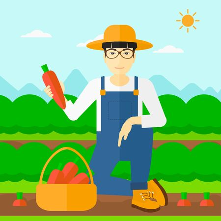 collecting: An asian man collecting carrots in basket on the background of field rows with green bushes vector flat design illustration. Square layout.