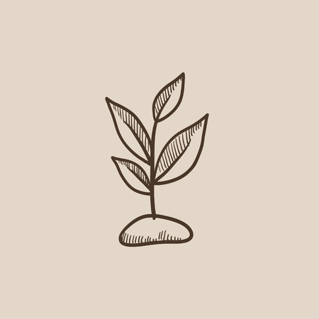 Sprout sketch icon for web, mobile and infographics. Hand drawn vector isolated icon.