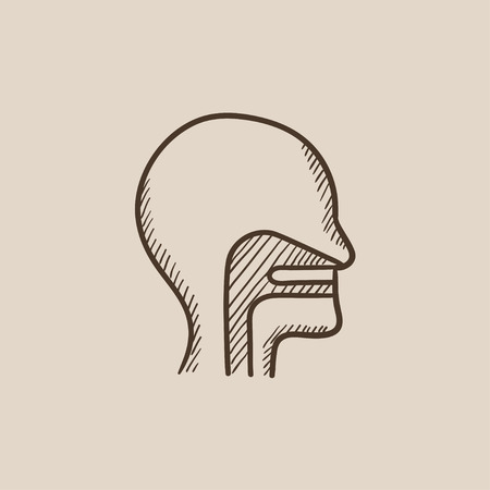 ear nose throat: Human head with ear, nose, throat system sketch icon for web, mobile and infographics. Hand drawn vector isolated icon. Illustration