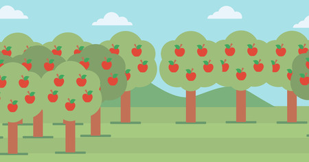 Background of trees with red apples in an orchard vector flat design illustration. Horizontal layout.