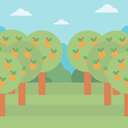 Background of orange trees in an orchard vector flat design illustration. Square layout. Ilustração