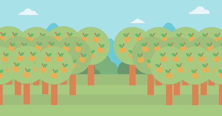 orchard: Background of orange trees in an orchard vector flat design illustration. Horizontal layout.