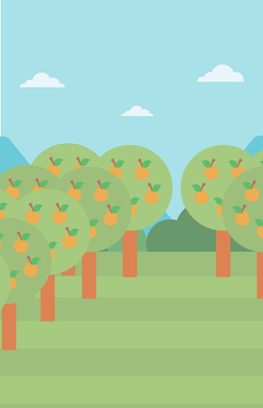 orchard: Background of orange trees in an orchard vector flat design illustration. Vertical layout.