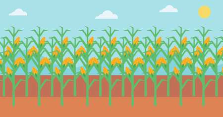 corn field: Background of corn field vector flat design illustration. Horizontal layout. Illustration