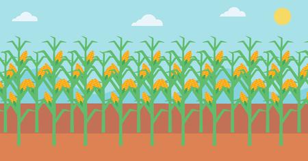 agrarian: Background of corn field vector flat design illustration. Horizontal layout. Illustration
