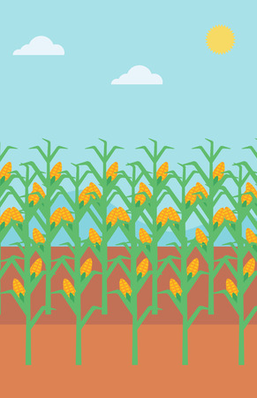 corn field: Background of corn field vector flat design illustration. Vertical layout.