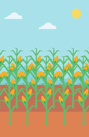 cornfield: Background of corn field vector flat design illustration. Vertical layout.