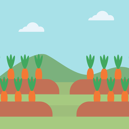 agrarian: Background of carrots growing on field vector flat design illustration. Square layout.