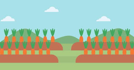 cartoon carrot: Background of carrots growing on field vector flat design illustration. Horizontal layout.