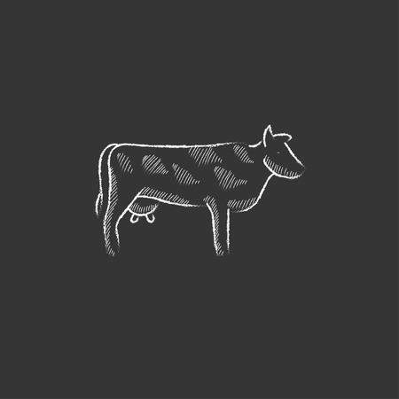 Cow. Hand drawn in chalk vector isolated icon for web, mobile and infographics.
