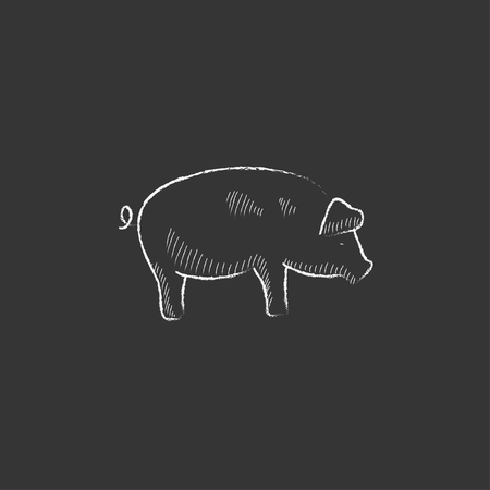 Pig. Hand drawn in chalk vector isolated icon for web, mobile and infographics.