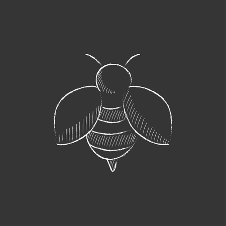 Bee. Hand drawn in chalk vector isolated icon for web, mobile and infographics.