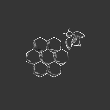 Honeycomb and a bee. Hand drawn in chalk vector isolated icon for web, mobile and infographics.