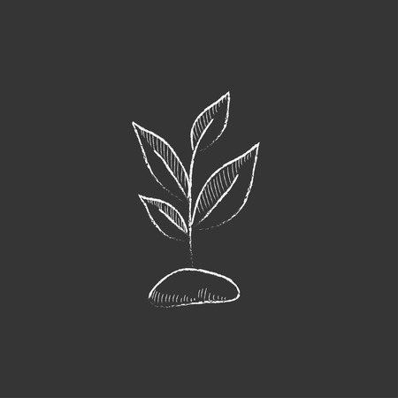 fertile: Sprout. Hand drawn in chalk vector isolated icon for web, mobile and infographics.
