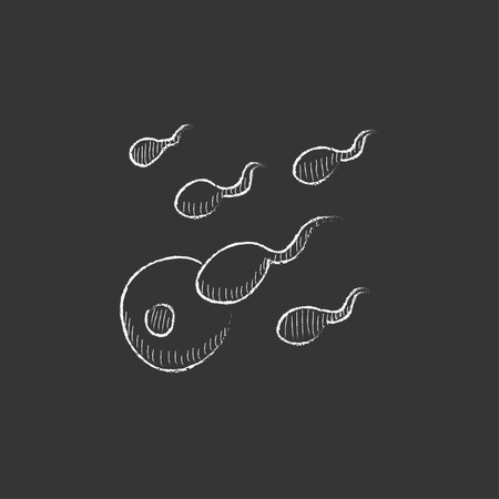 conjugation: Fertilization. Hand drawn in chalk vector isolated icon for web, mobile and infographics.