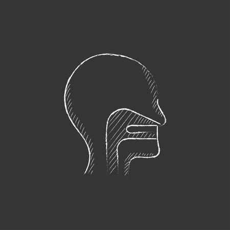 ear nose throat: Human head with ear, nose, throat system. Hand drawn in chalk vector isolated icon for web, mobile and infographics.