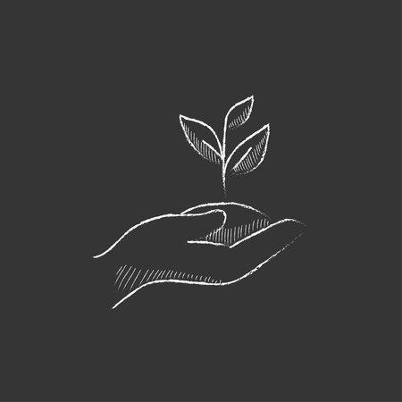 fertile: Hands holding seedling in soil. Hand drawn in chalk vector isolated icon for web, mobile and infographics. Illustration
