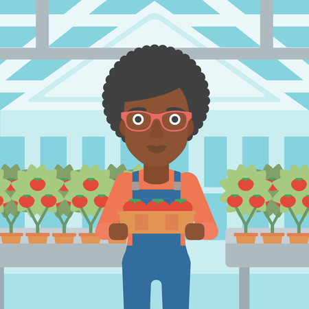 An african-american woman holding a box with tomatoes on the background of greenhouse vector flat design illustration. Square layout.